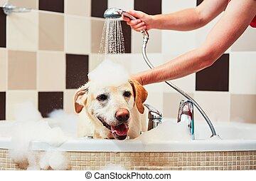 levando, cão, banho