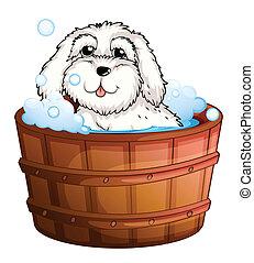 levando, filhote cachorro, banho