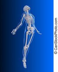 levantamiento, radiografía, -, cuerpo