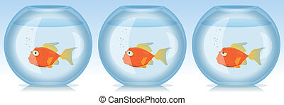 leven, aquariumvissen, goud, tijden