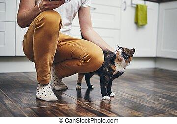 leven, huiselijke kat
