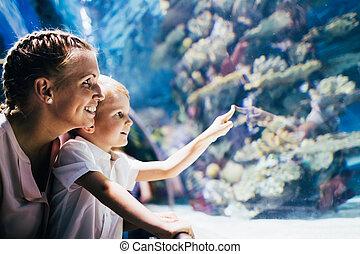 leven, schouwend, oceanarium, zoon, zee, moeder