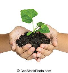 leven, vasthouden, geven, op, boompje, vrijstaand, hand, achtergrond, aarde, witte