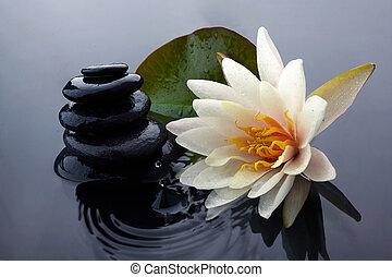 leven, zen, steen, water, sereniteit, spa, nog, lelie, pool