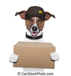 leverans, post, hund