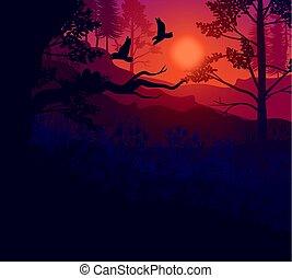 levers de soleil, fond, paysage, forêt