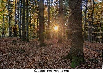levers de soleil, forêt