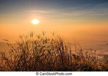 Levers de Soleil, paysage,  nature