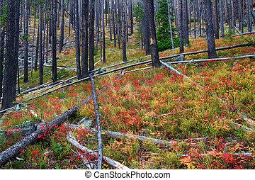 lewis, nacional, montana, bosque, clark