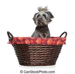 Lhasa Apso dog sitting in basket