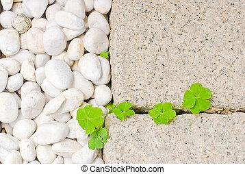 liść, biały, zielony, kamyk