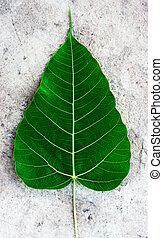 liść, ciemny, bodhi, zielony strój, poświęcony, albo