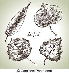 liść, komplet, ręka, pociągnięty