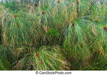 liść modelują, kasownik, struktura, tło, zielony, ogród