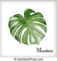 liść, monstera, tropikalny