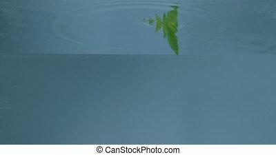 liść, pod, ukazujący, zielony, zwrotnik, water.
