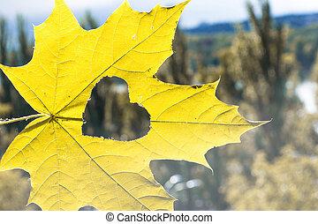 liść, serce, jesień