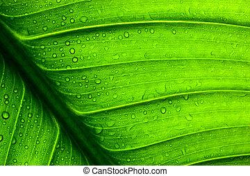 liść, struktura, zielony