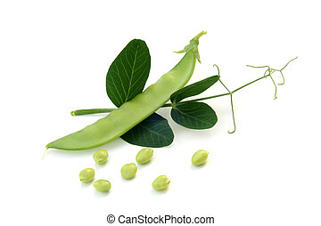 liście, świeży groch, zielony