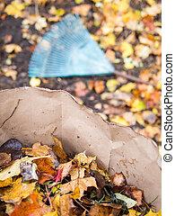 liście, amfiladowy, upadek