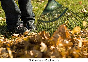 liście, amfiladowy