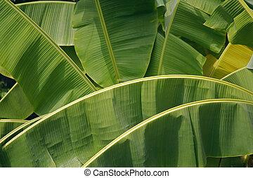 liście, dłoń, banan