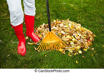 liście, grabie, upadek