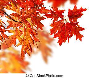 liście, jesień, brzeg