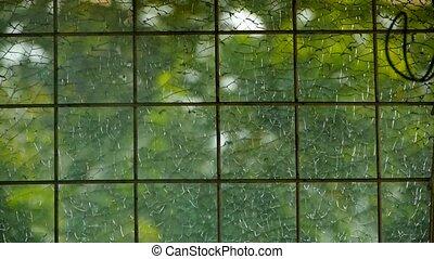 liście, kołysząc, w, okna