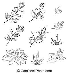 liście, kontur, komplet