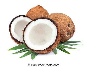 liście, orzech kokosowy