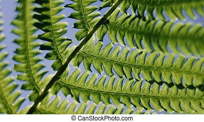 liście, pod, zielony, paproć