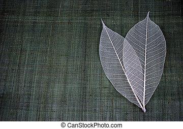 liście, przeźroczysty