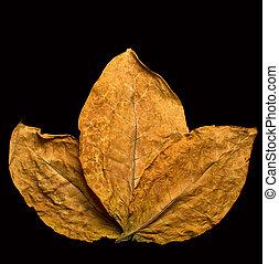 liście, suchy