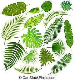 liście, tropikalny, wektor, zbiór, ilustracja
