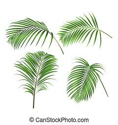 liście, wektor, roślina, ozdoba, komplet, dłoń, dwa