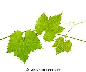 liście, winorośl