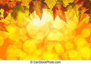 liście, wisząc, drzewo, tło, upadek, klon