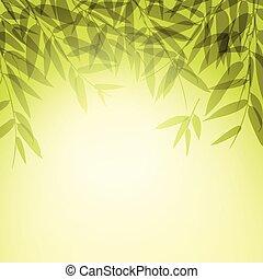 liście, zachód słońca, time., drzewa, bambus