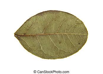 liście, zatoka
