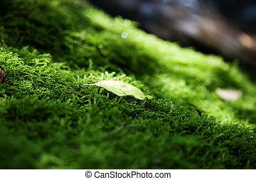liście, zielony, mech