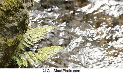 liście, zielony, paproć