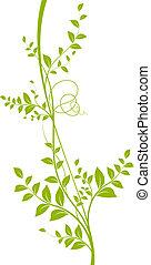 liana, blanc, vecteur, arrière-plan vert