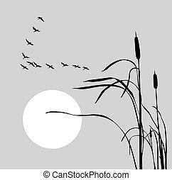 libák, bulrush, rajz, falka, vektor