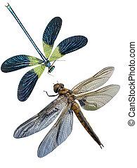 libélula, insectos