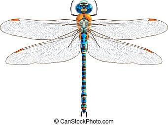 libélula, isolado, realístico