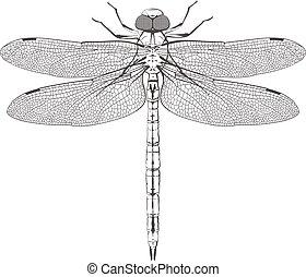 libélula, simétrico, grande