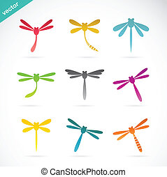 libélula, vetorial, grupo, coloridos
