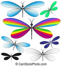 libélulas, ornamental, jogo, isolado, multicolored