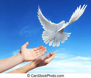 libéré, colombe blanc, ciel, mains